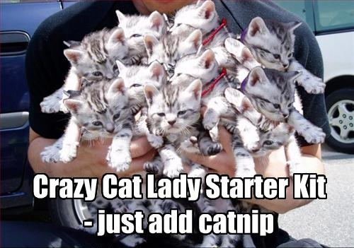 Dating blog crazy cat lady