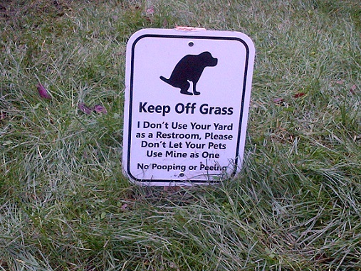 how to keep dog from pooping in my yard